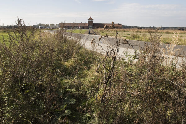View from the overgrown railway track to Birkenau, 2006. Collection: Hans Citroen