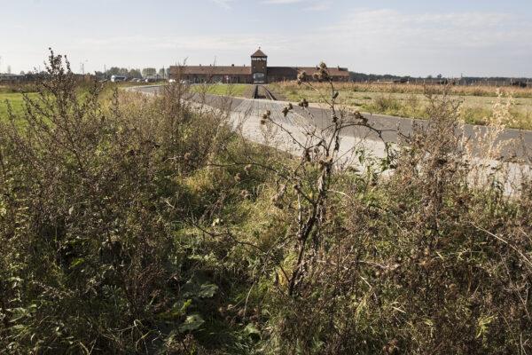 Vue depuis l'ancienne voie ferrée vers Auschwitz-Birkenau. Collection : Hans Citroen